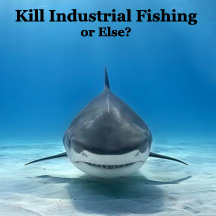 Industrial Fishing Must Be Stopped