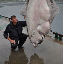 A 515 Pound Halibut, a Real Endangered Species