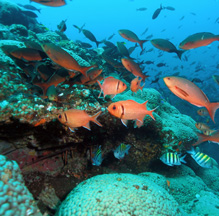 Amended Trade Agreements Must Include Provisions on Saving the Ocean Wildlife & Marine Ecosystems