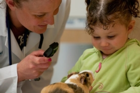 Tackling the Veterinary Suicide Crisis